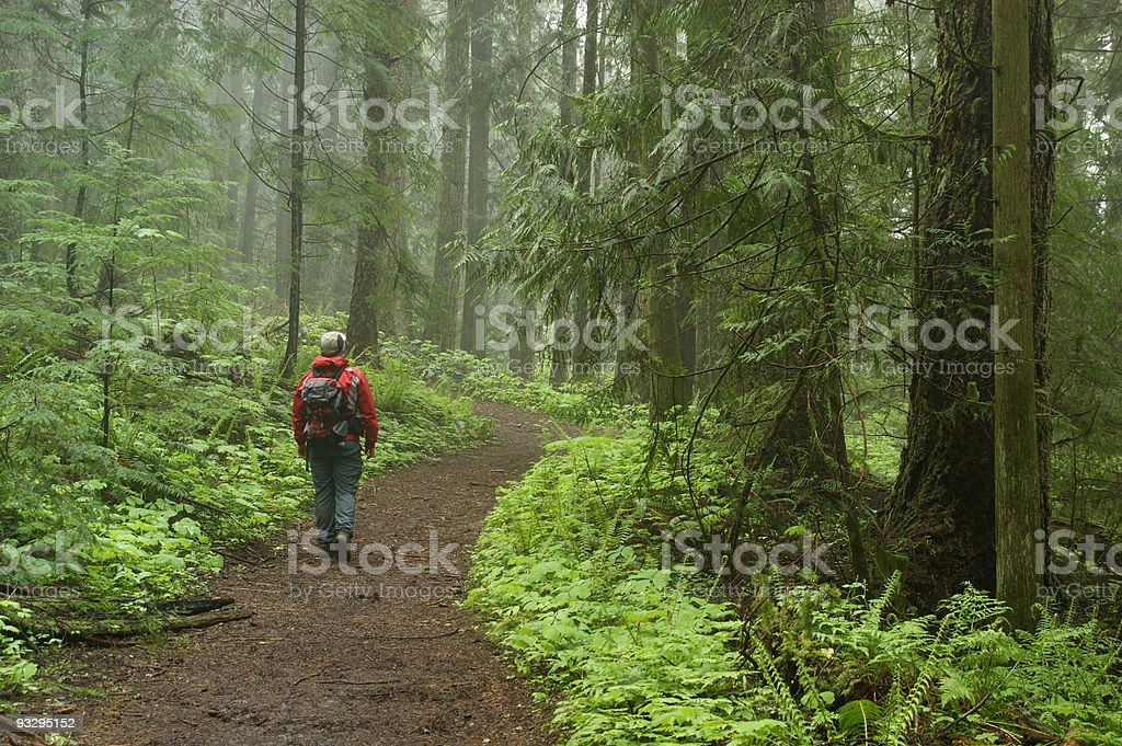 Hiker in a misty forest royalty-free stock photo