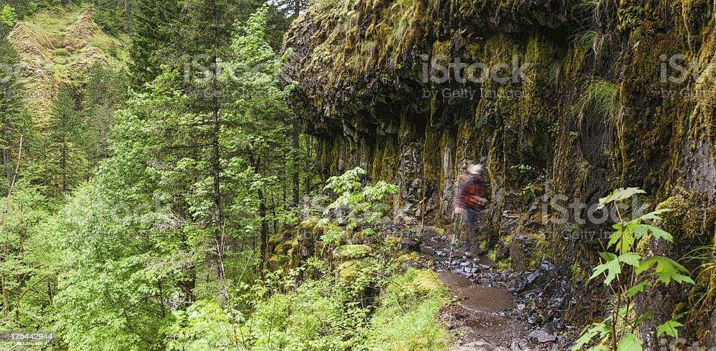 Hiker in forest canyon Pacific Crest Trail Oregon stock photo