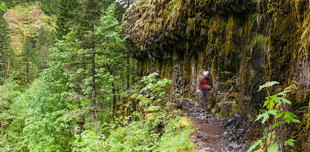 wanderer im wald canyon pacific crest trail, oregon - pacific crest trail stock-fotos und bilder