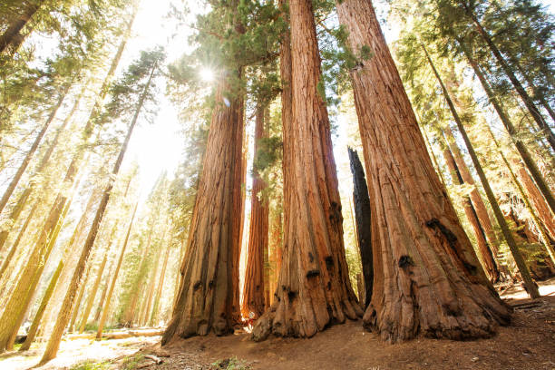 Wanderer im Sequoia National Park in Kalifornien, USA – Foto