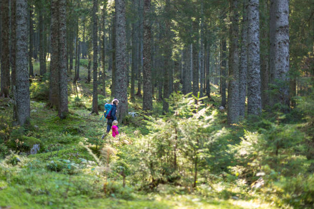 Hiker mother and daughter with backpack in the forest. stock photo