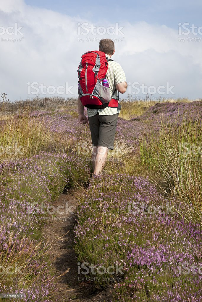 Hiker on the North York Moors royalty-free stock photo