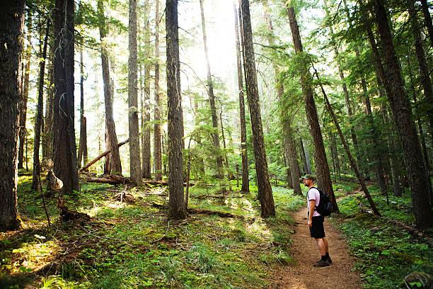 wanderer auf der pacifc crest trail - pacific crest trail stock-fotos und bilder