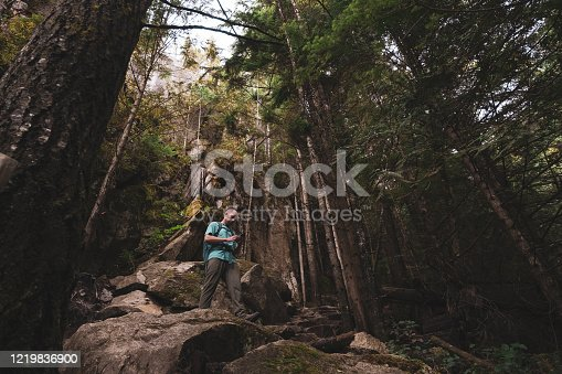 A male hiker stops to check his position using his mobile phone. He hikes through a forest of trees. Hiker has a backpack over his shoulders.