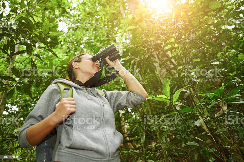 Wanderer sich durch ein fernglas wild lebende vögel im dschungel