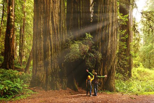Hikers admiring Redwood trees, Redwood National Park, California