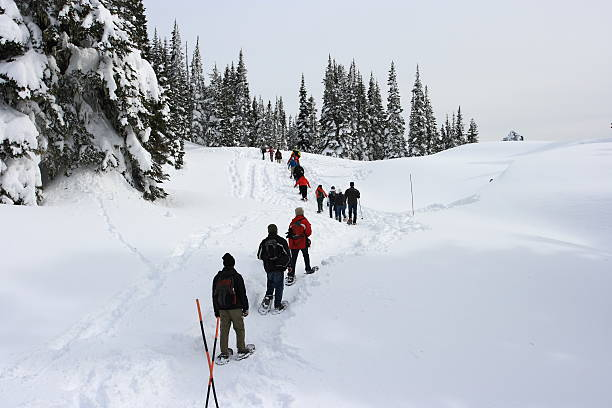 Hikers in Mt Rainier Snowshoeing in Mt Rainier (pls see my other nature photos) pierce county washington state stock pictures, royalty-free photos & images