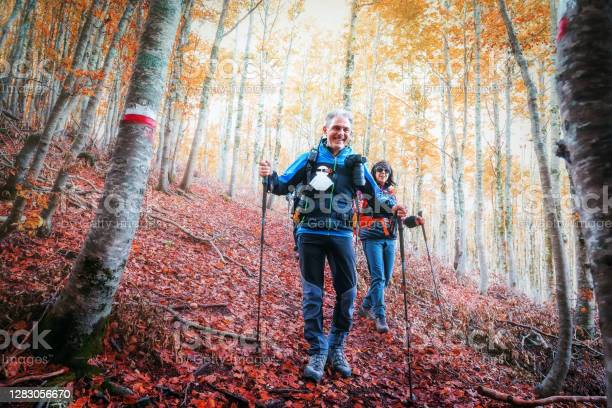 Photo of Hikers in the beech tree forest in autumn.