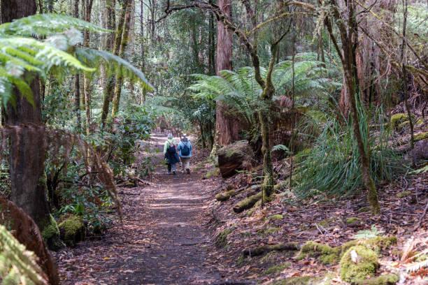 Wanderer im Regenwald – Foto