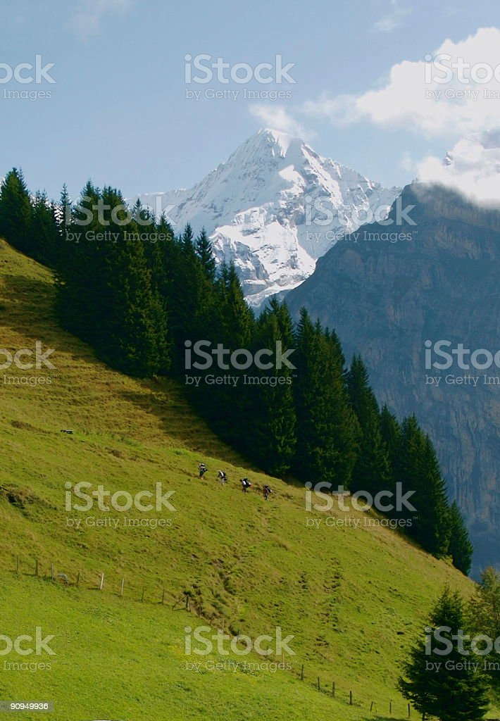 Hikers in the Swiss Alps royalty-free stock photo