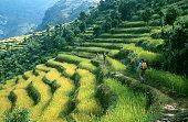 Walking between rice fields\n\nMore images of same photographer in lightbox:\n[url=http://www.istockphoto.com/my_lightbox_contents.php?lightboxID=3381079]\n[img]http://i154.photobucket.com/albums/s260/robas_istock/nepal_klein.jpg[/img][/url]