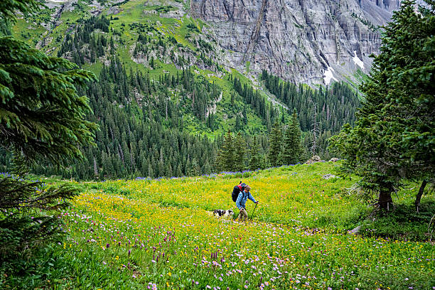 Hiking Among Beautiful Wildflowers and Mountain Scenery Hiking Among Beautiful Wildflowers and Mountain Scenery - Scenic landscape with colorful wildflowers and mountains with man and dog hiking through scenery.  Sneffels Wilderness, Colorado USA. san juan mountains stock pictures, royalty-free photos & images