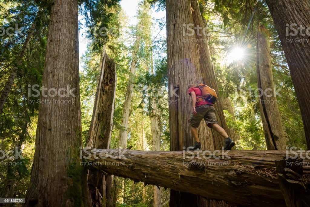 Hiking ancient cedars stock photo