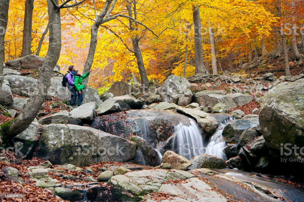 Hiking at a wonderful forest in autumn stock photo