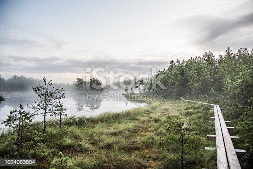 Hiking at dawn in a bog
