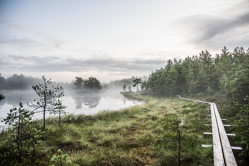 Hiking at dawn in a bog