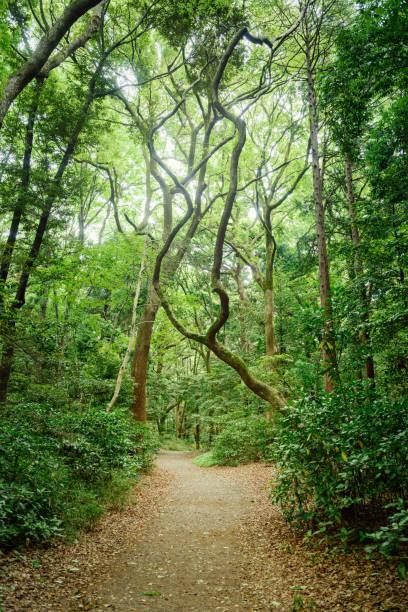 hiking course in the forest - 介護 zdjęcia i obrazy z banku zdjęć