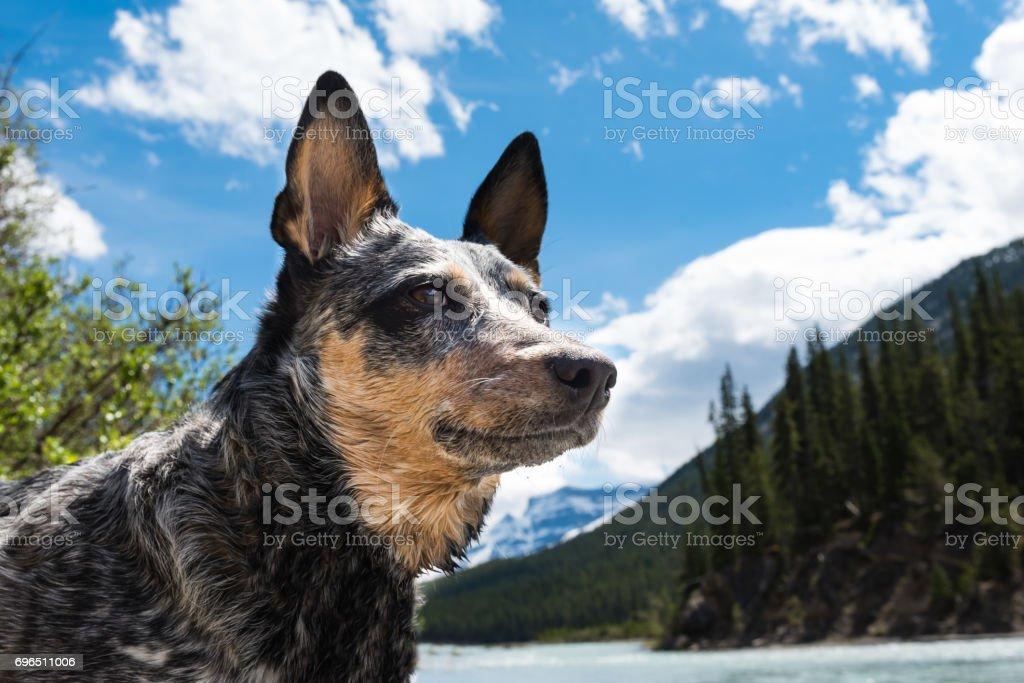 Hiking Dog – zdjęcie