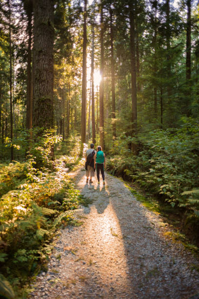 Hiking Father and Daughter Exploring Sunlit Forest Trail in Canada stock photo