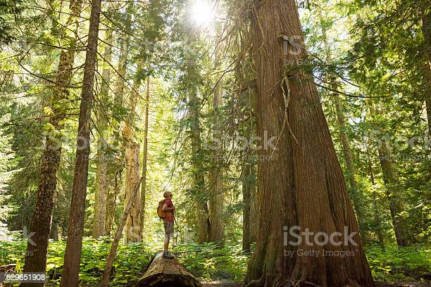 Photo of Hiking in a temperate rainforest