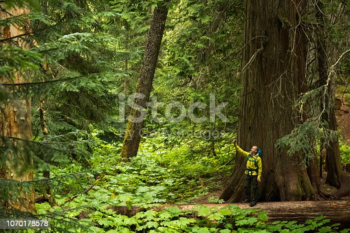 Man hiking in a coastal old growth temperate rain forest