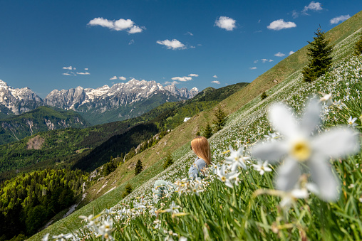 Hiking in blooming Daffodil flowers in amazing Golica