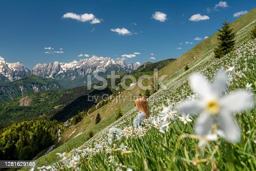 istock Hiking in blooming Daffodil flowers in amazing Golica 1281629165