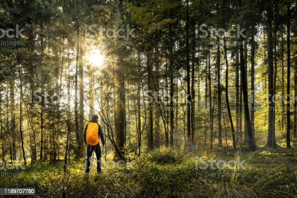 Photo of Hiking in forest