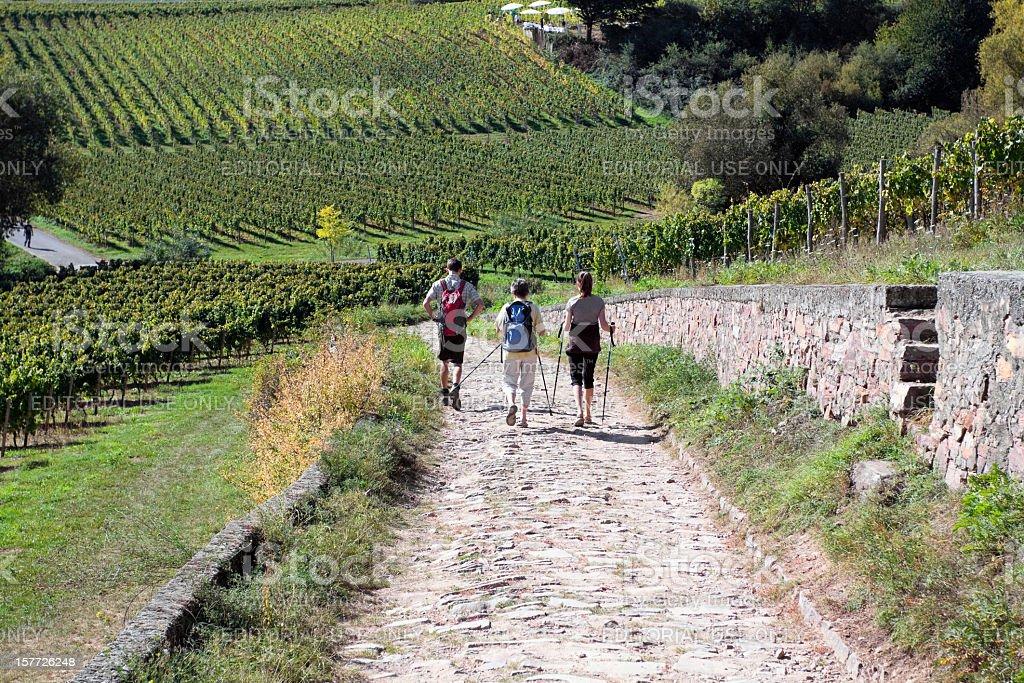 Hiking in Rheingau royalty-free stock photo