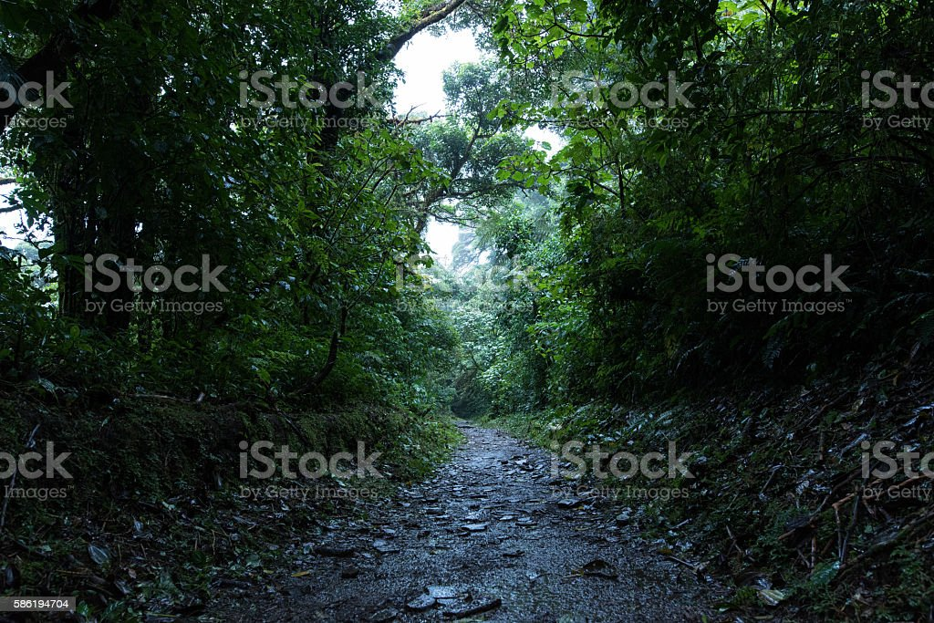 Hiking in the cloud forest of Monteverde Costa Rica stock photo