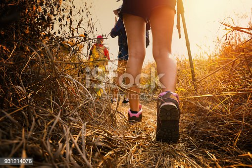 istock Hiking in the forest during summer. 931214076
