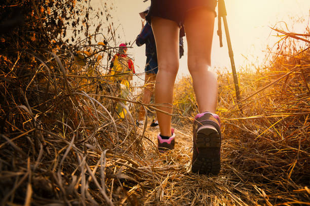 Wandern im Wald im Sommer. – Foto