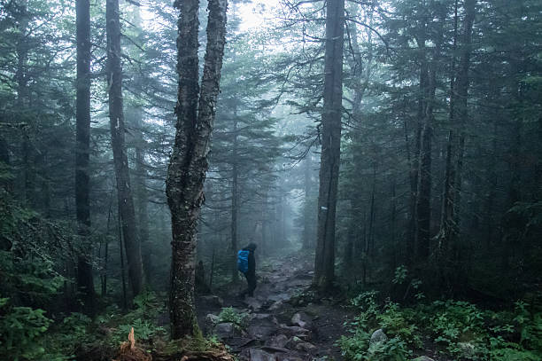 Hiking in the forest of Mont Tremblant National Park – Foto