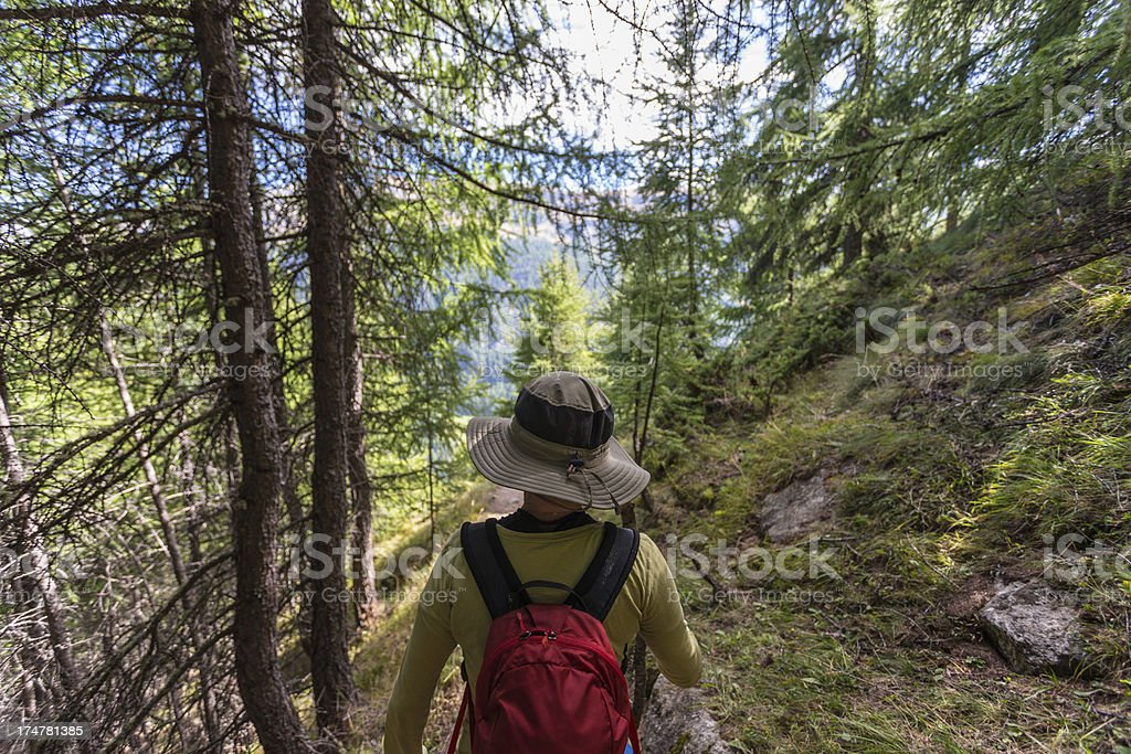 Hiking in the Swiss Alps forest royalty-free stock photo