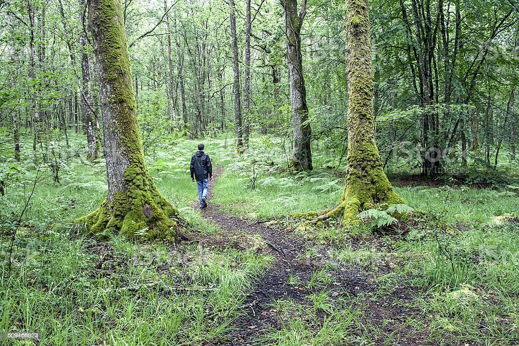 young man walking alone on a path in the legendary Paimpont Forest...