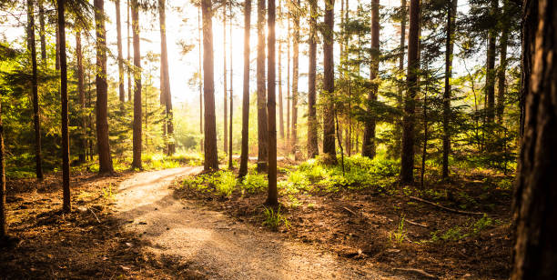 Hiking path and sunset in beadutiful woods stock photo