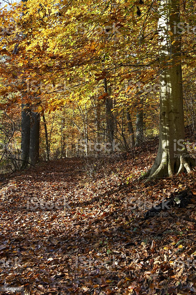 Hiking Path in Autumn Forest stock photo
