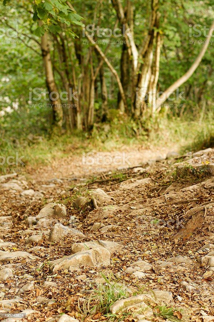 Percorso per escursioni in Cheddar foto stock royalty-free
