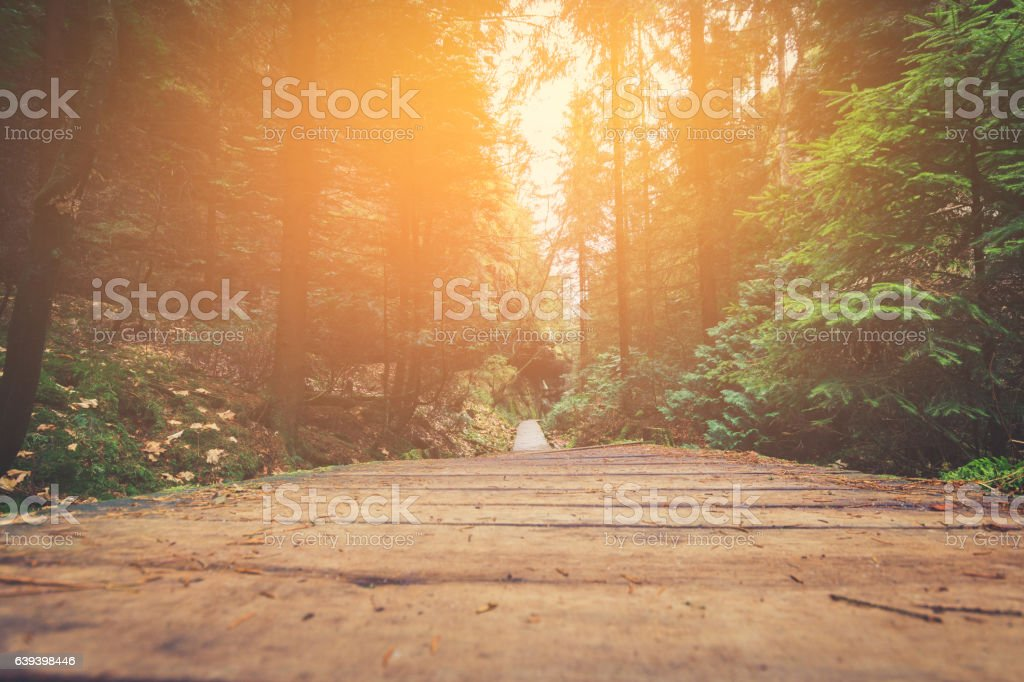 hiking path in forest landscape stock photo