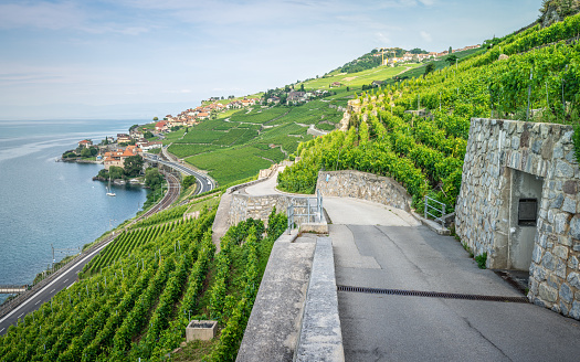 Hiking path in middle of Lavaux terraced vineyards and Rivaz village on Lake Geneva side in Lavaux Vaud Switzerland