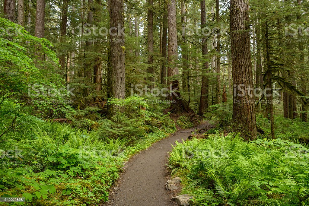 Hiking Path in Rain-Forest stock photo