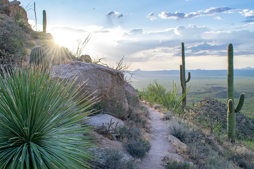 Trail on Rocky Hillside in Saguaro National Park (Sonoran Desert) at Sunset - Tucson, Arizona, USA