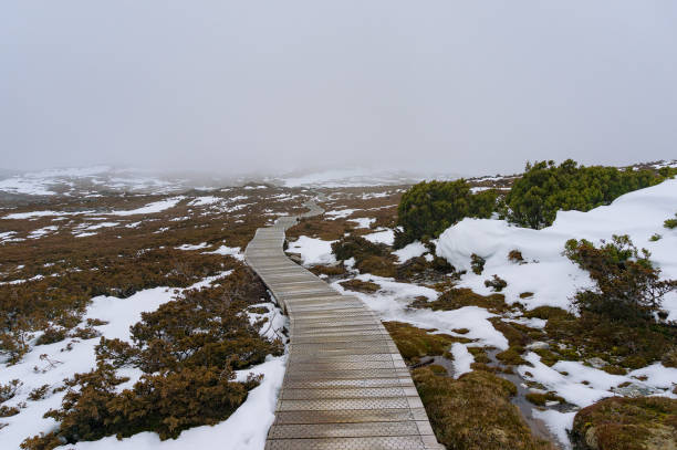 hiking path in the mountain in winter - cradle mountain stock photos and pictures