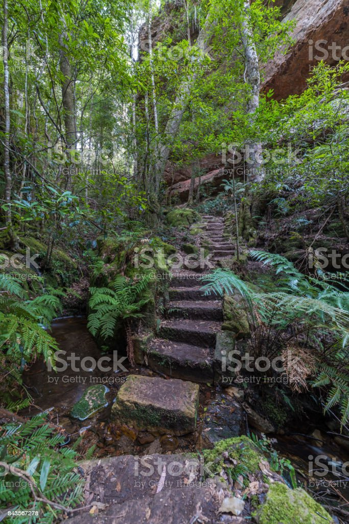 Hiking path in tropical forest stock photo