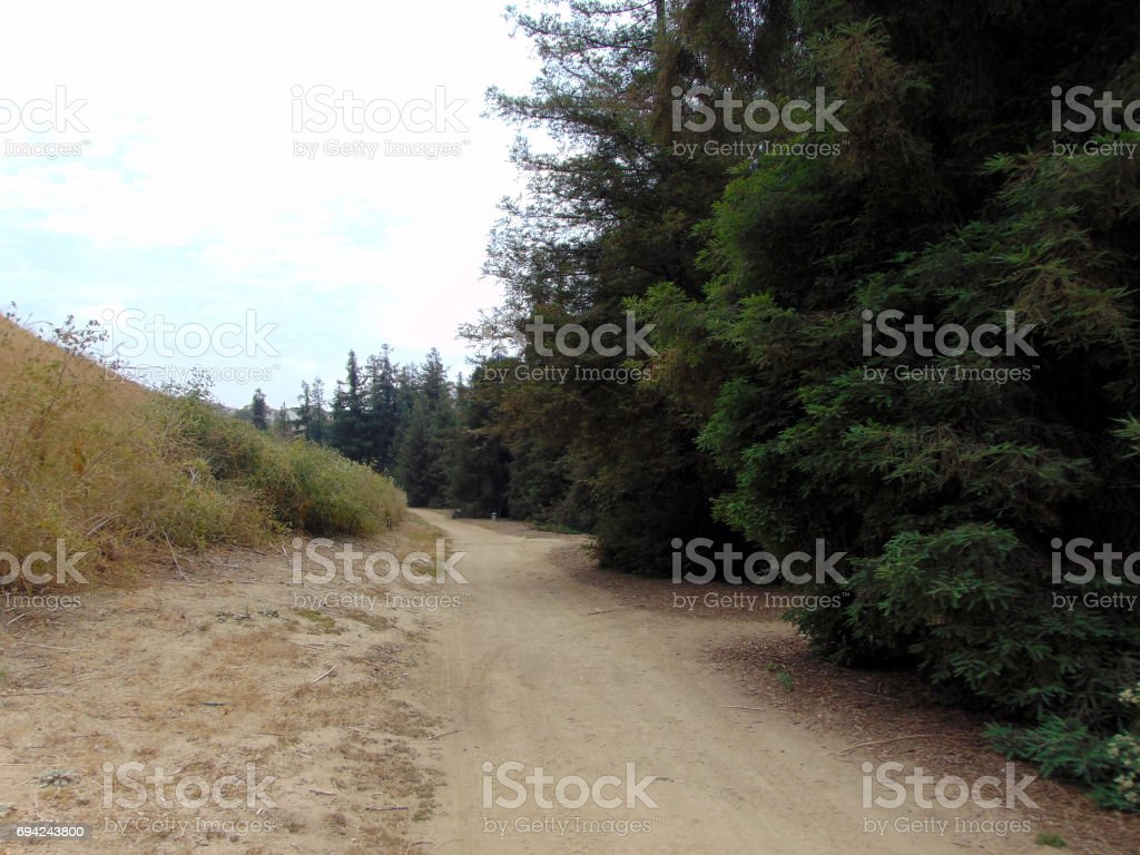 A Hiking Path Near the Redwoods stock photo