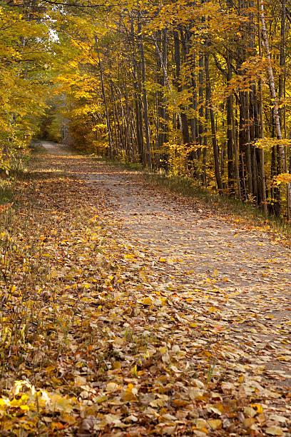Hiking Path Through Fall Colors stock photo