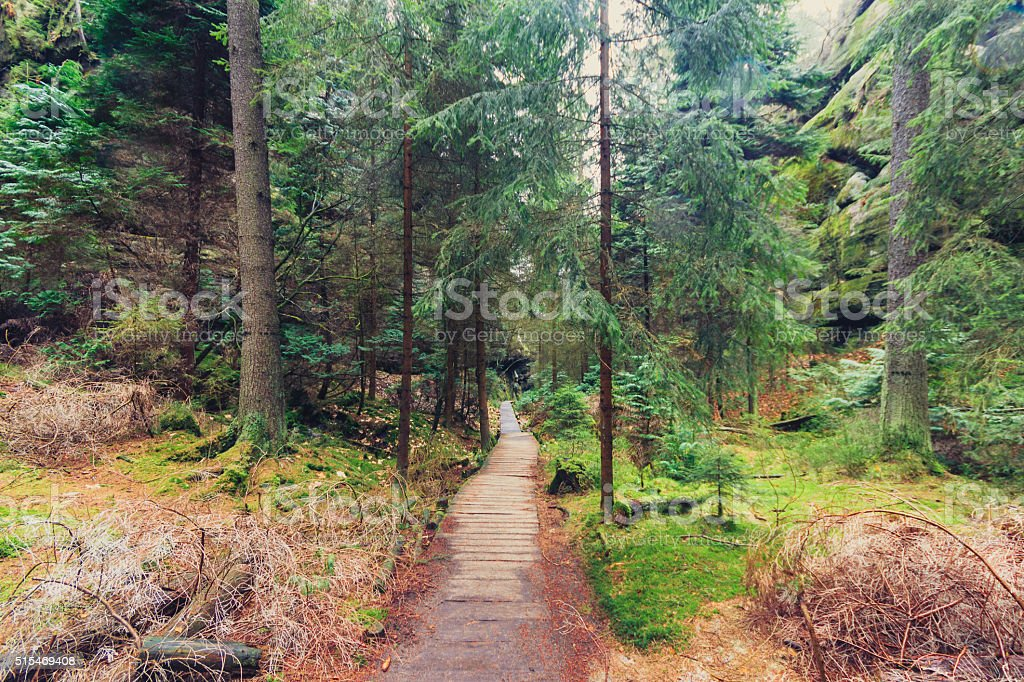 hiking path through forest landscape stock photo