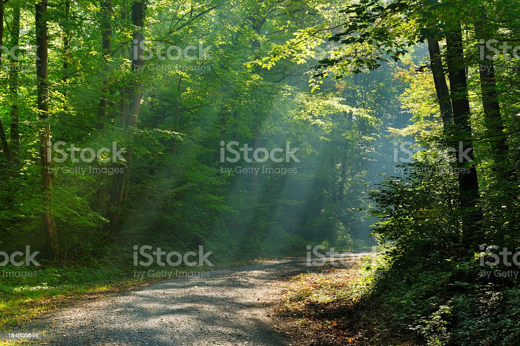 Hiking Path through Mixed Deciduous Tree Forest with Sunrays royalty-free stock photo