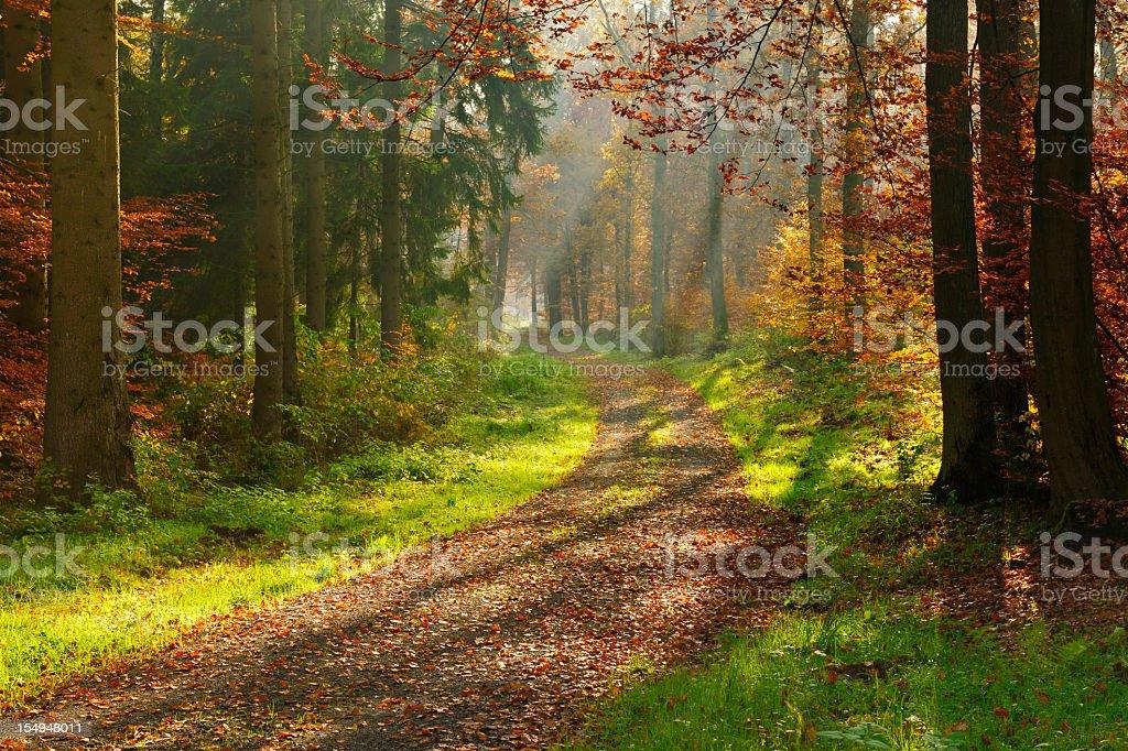 Wanderweg durch gemischte-Wald mit Sonnenstrahlen wecken im Herbst – Foto