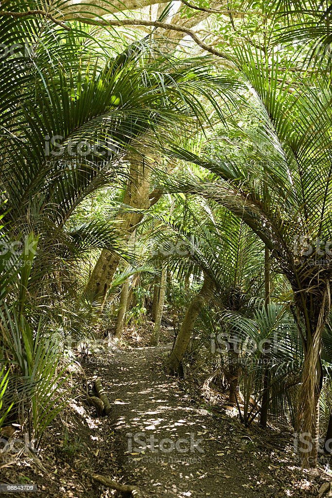hiking path through native bush, Wendeholm National Park royalty-free stock photo